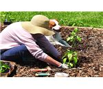 environmentally friendly mulch