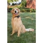PetSafe GPS Dog Collar