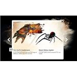 GW2 Fire God's Vambraces and Black Widow Spider