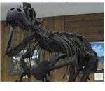 montana-photographs-malta-dinosaur