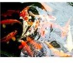 fish_farming