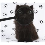 cat-magnifying-glass-1