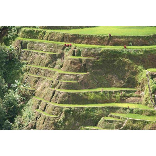 Explore the philippines famous landforms a showcase of 800px banaue rice terrace close up 3 the most famous of philippine landforms sciox Image collections
