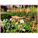 Summer Vegetable Garden