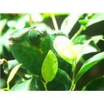 Chameleon in its Habitat. Image by cleuschner of Stock Exchange