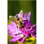 What's Bugging the Honey Bees?