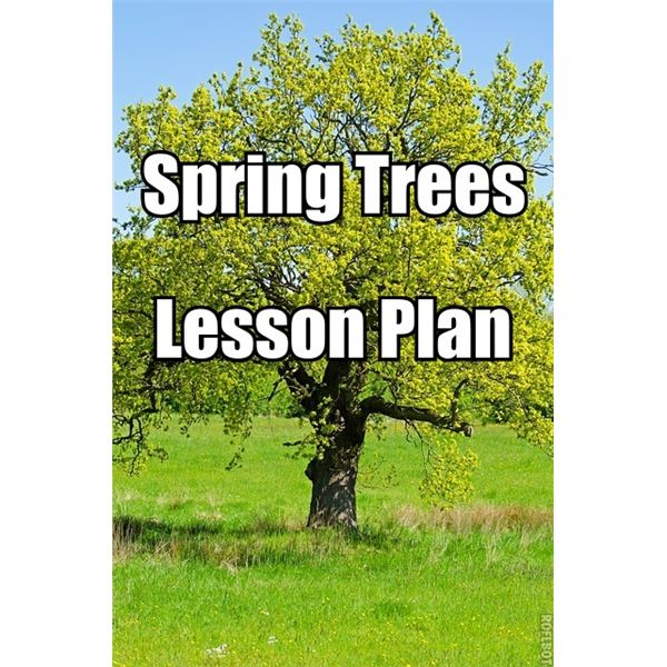 Trees In Spring Lesson Plan For 3rd To 5th Graders Perfect For A Tree Unit