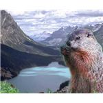 groundhog-day-backgrounds-groundhog-infront-mountains