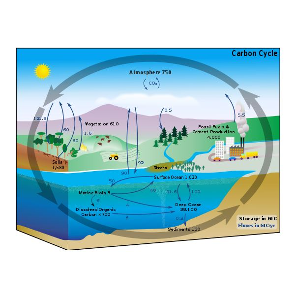 The Human Influences on the Global Carbon Cycle