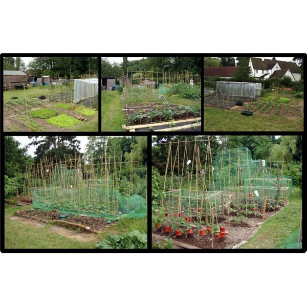 A Home Vegetable Garden Plan on How to Grow Organic Garden