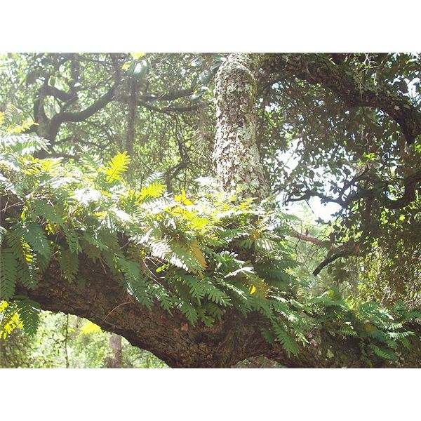 Do Ferns Grow Under Oak Trees : Examples of autotrophs plants algae and bacteria