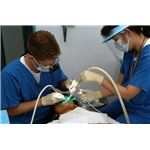 800px-US Navy 030620-N-8937A-002 Lt. William Peterson (left) of Branch Dental Clinic Sasebo, Japan drills a cavity while his dental assistant, Miho Otubo, ensures the area remains clean