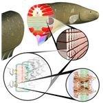 eel anatomy