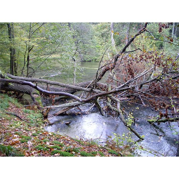 What are the Effects of Acid Rain Effects on Animal Habitats and ...