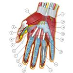 Wrist strengthening exercises