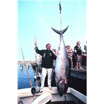 Big-game fishing for giant tuna