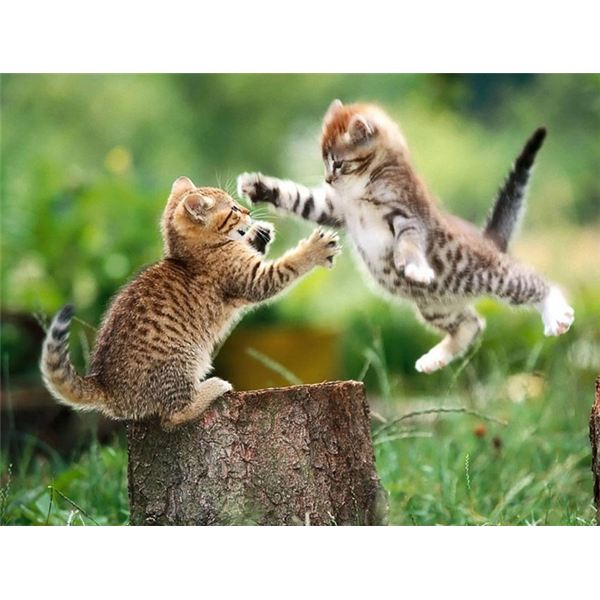 30 Funny Pictures <b>Cat</b> and Dog <b>Fight</b>, Who wins!
