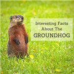 Can the cute little groundhog really predict the end of winter?