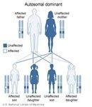 Autodominant Genes