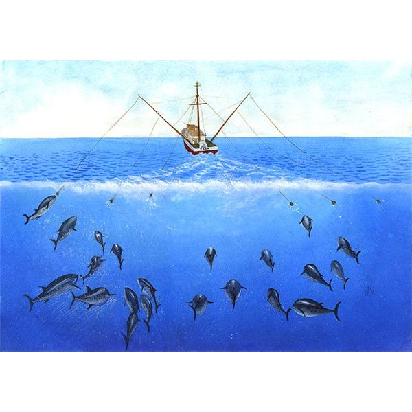 Overfishing bluefin tuna facts and information on for Tuna fishing video