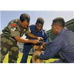 800px-US Navy 070814-N-4954I-020 Indian army, Cpl. Dinesh K. Singh, a veterinarian technician, gives de-wormer medication to a German Shepherd with the local police canine unit