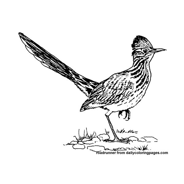 Road Runner Bird Coloring Pages