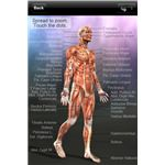 Learn Muscles - Anatomy Quiz & Reference