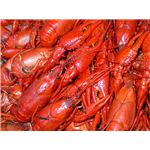Boiled Crayfish USGS