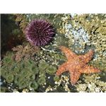 seastar flickr