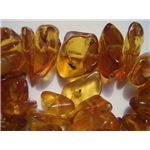 Insects in baltic amber