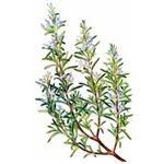 Herbs to Prevent Hot Flashes