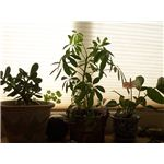 Windowsill Plants
