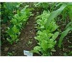 Worm Castings as Natural Fertilizer