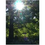 Lens flare- rays,