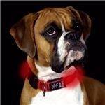 Nite Dawg LED Collar