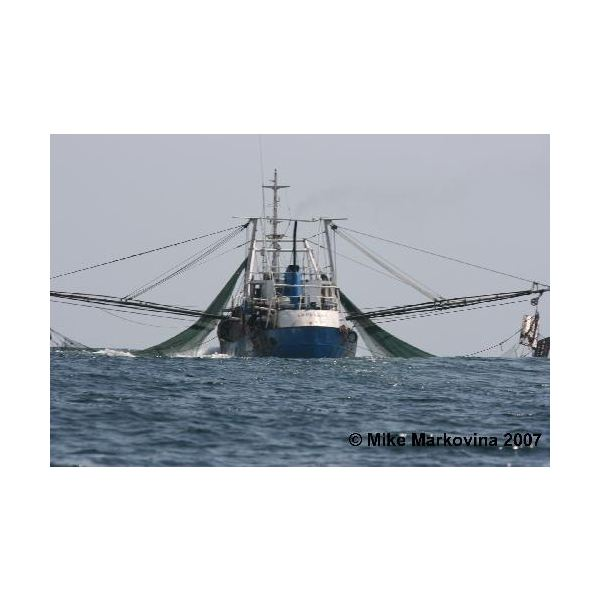 illegal bottom trawl boat 1
