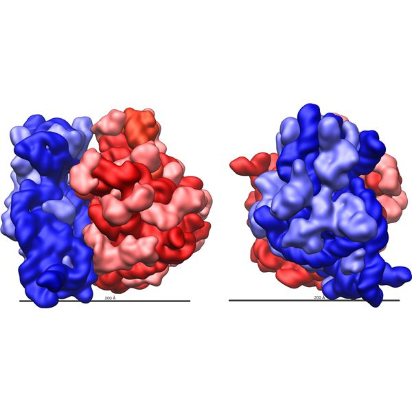Ribosome FAQ: What Are Ribosomes Made Of?What Are Ribosomes Made Of? And Other Ribosome Questions