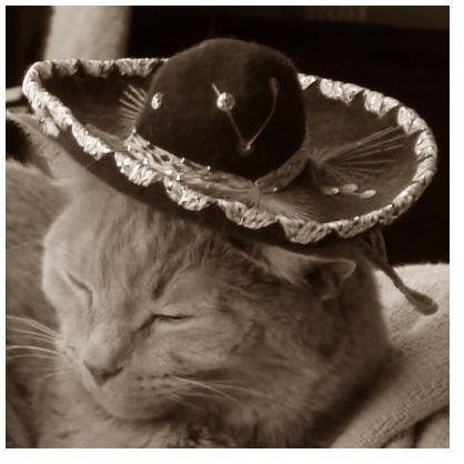 Cat Sepia