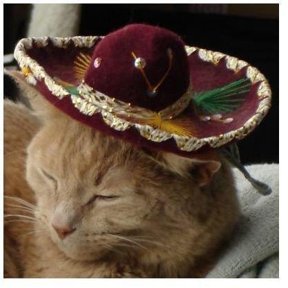 Original Cat Photo