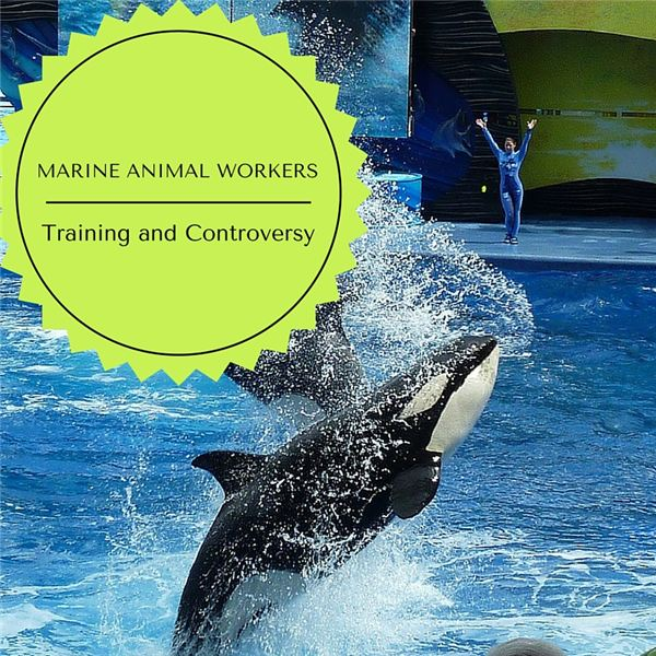 MARINE ANIMAL WORKERS