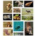 523px-Kingdom of animals