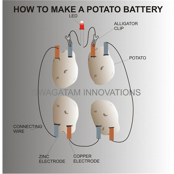 how to make a potato battery experiment with electricity rh brighthub com potato battery circuit diagram