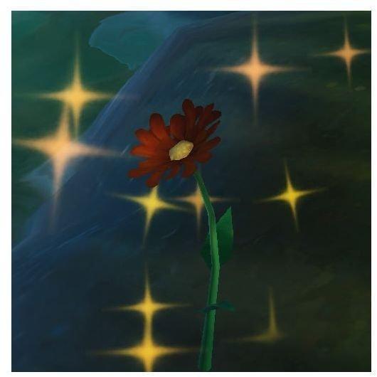 An Ammi Lily