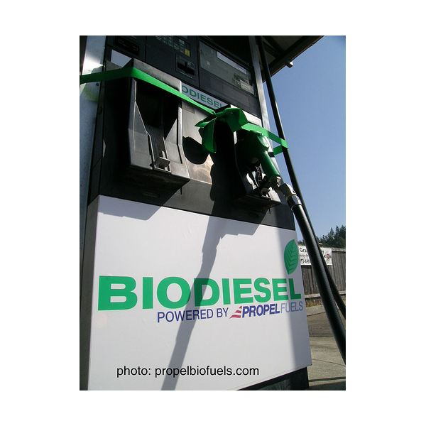 Biodiesel - An Alternative Fuel for Motor Vehicles