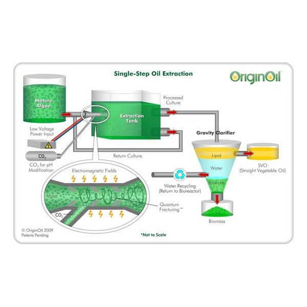 single step oil extraction method