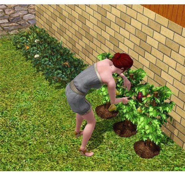 The Sims 3 Gardening