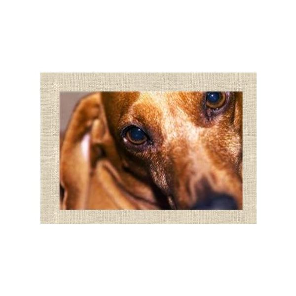 5 free pet sympathy cards for microsoft publisher