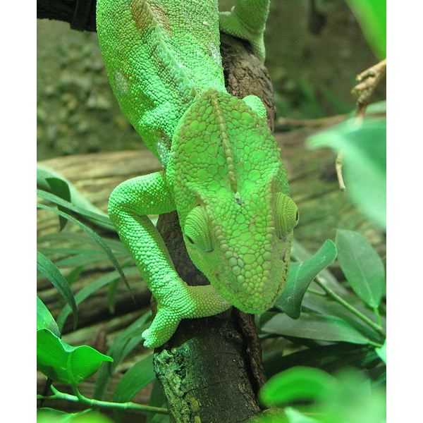 Camouflage Animals How Do Animals Camouflage If The