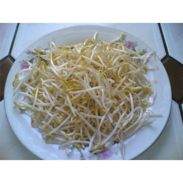 Bean Sprout: Nutrition Facts on Mung, Soybean, Lentil, Garbanzo and Adzuki Bean Sprouts