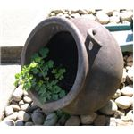 You can choose decorative containers to make your garden look more interesting.